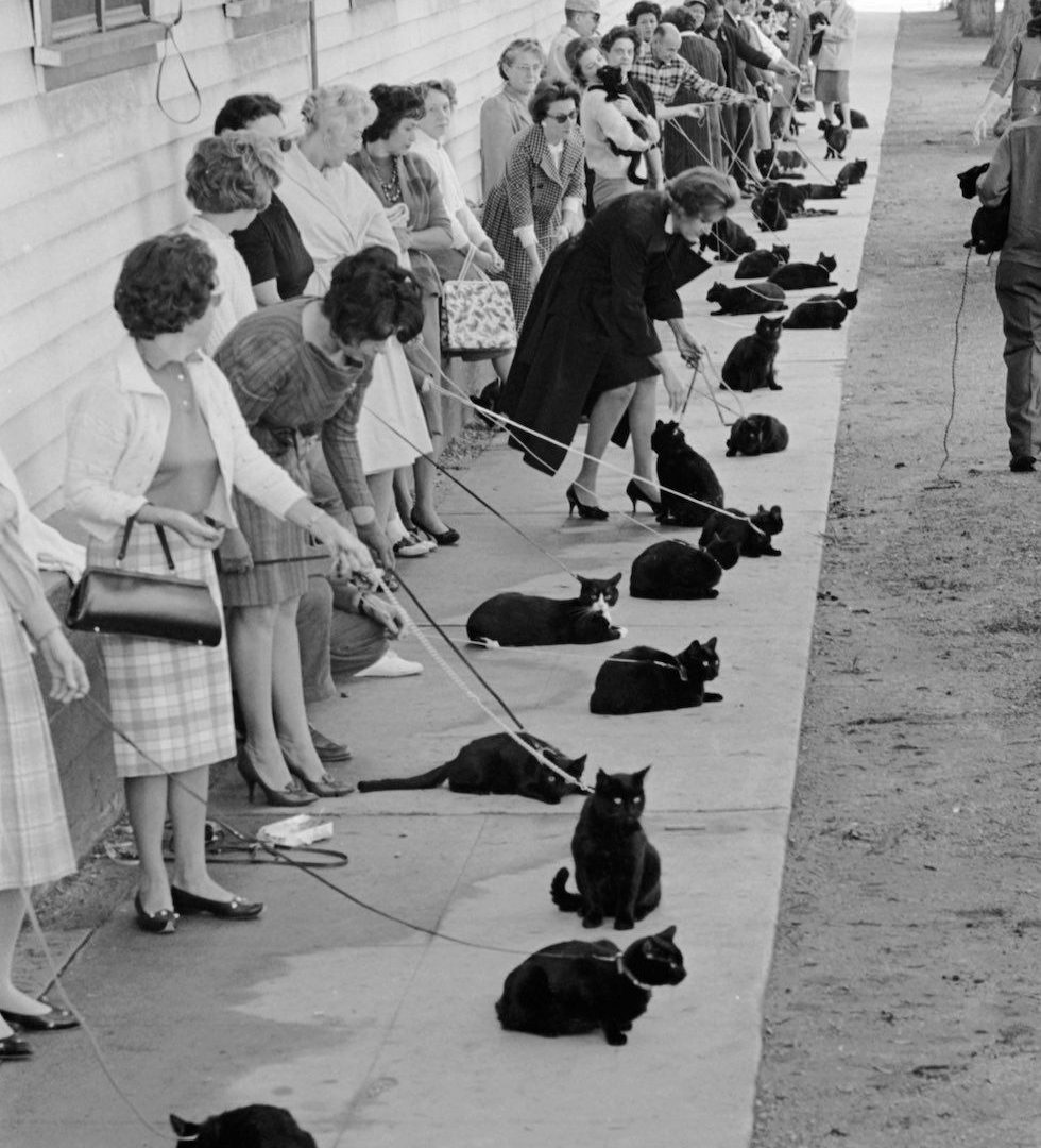 Cat actors in line for audition. Hollywood, 1961