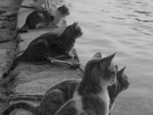 Cats Waiting for Fishermen to Return, Greece, 1970s