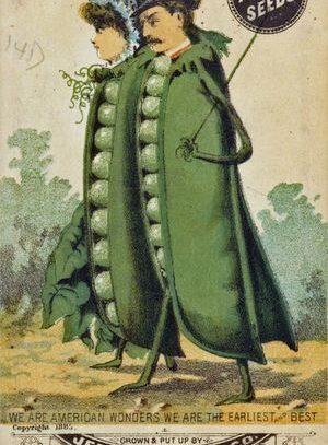 Seed Packet, Cambridge, 1885