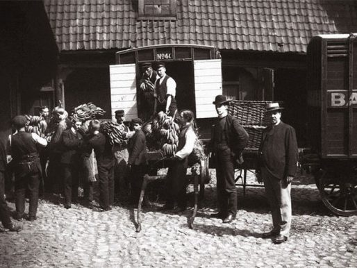 Bananas arrive to Norway at fist time, 1905