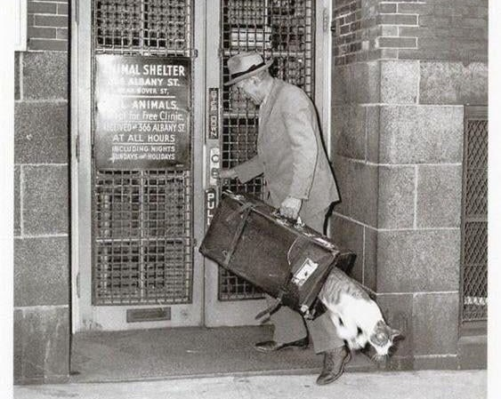 Cat escaping The Animal Rescue League, 1940