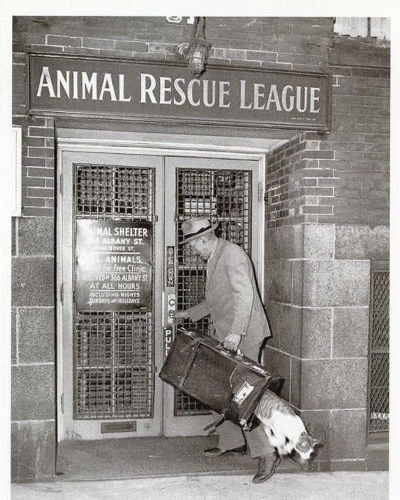cat The Animal Rescue League