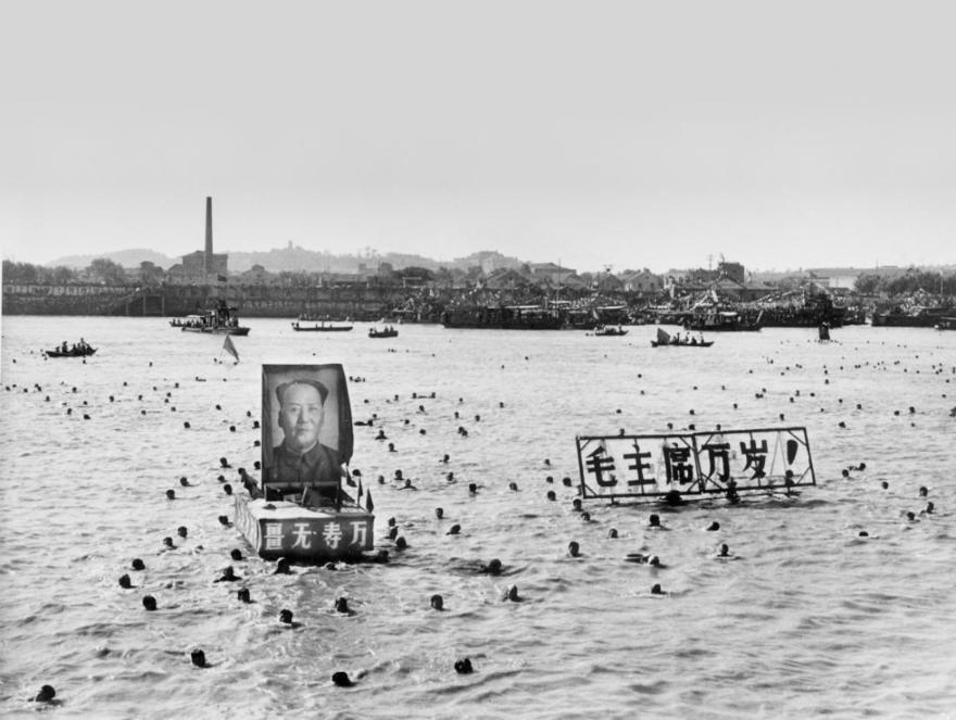 MAO portraits swimming