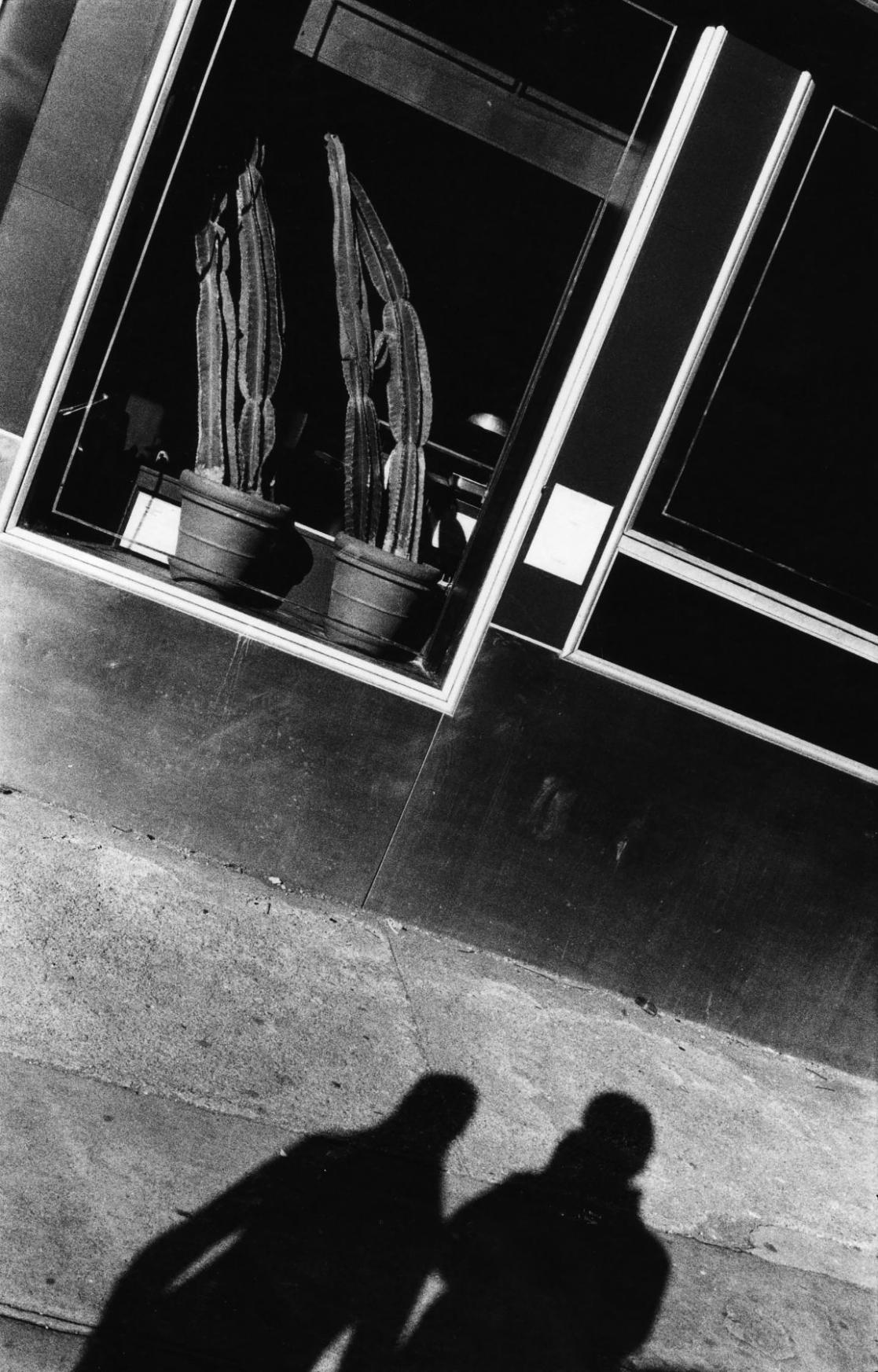 Anthony Barboza, Cactus & Shadows