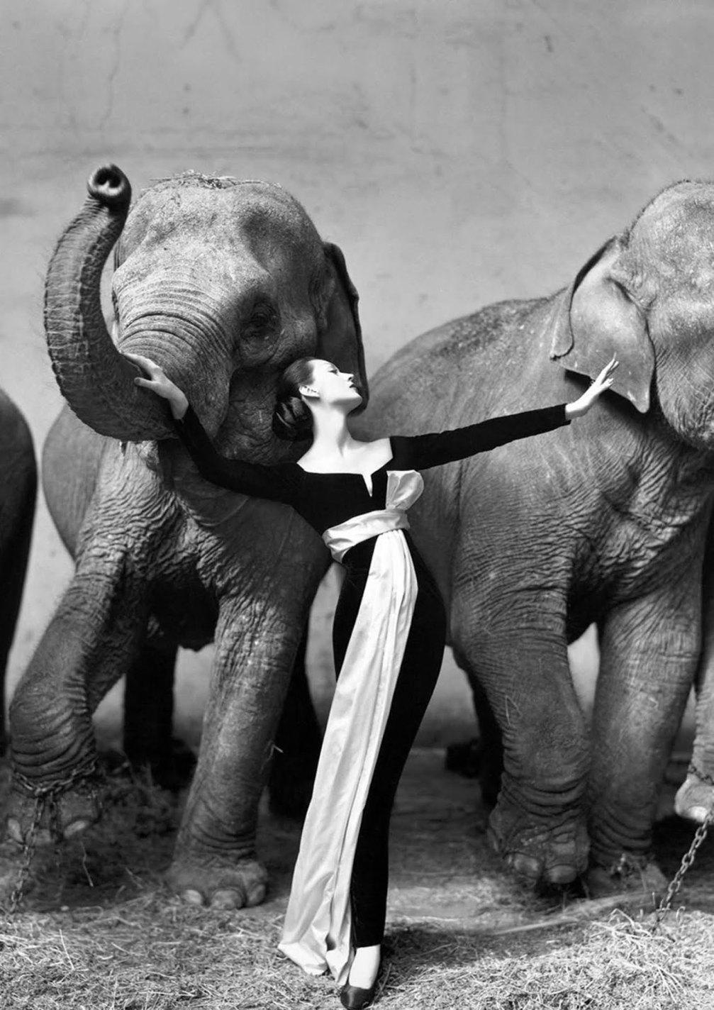 Dovima with elephants, Richard Avedon, 1955