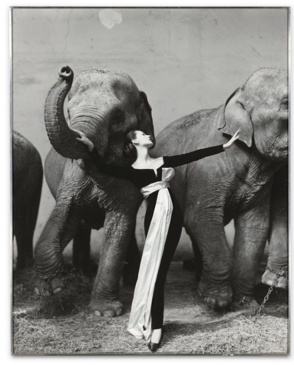 Dovima and Elephants most expensive photographs in history