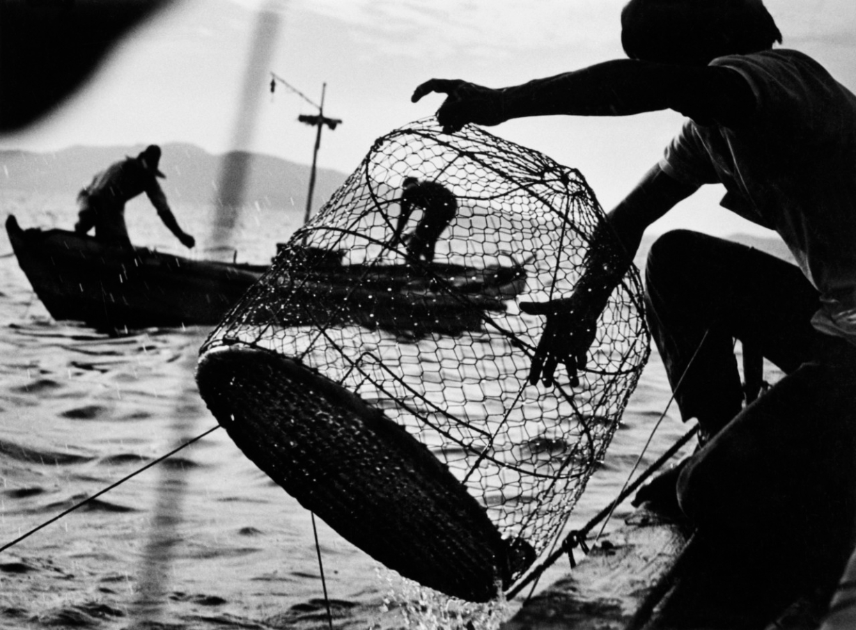 Fishing. Minamata Bay, Japan. 1972