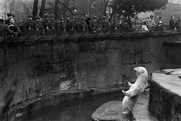 Soviet soldiers and white bear