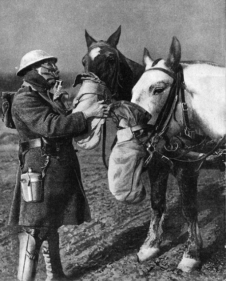 History of gas masks in photos: horse protection