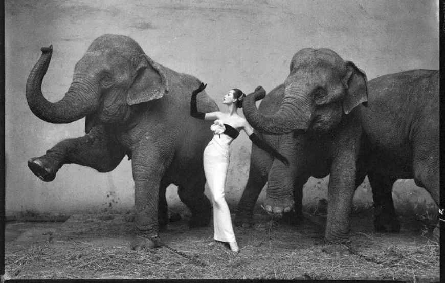 Dovima with elephants in a different