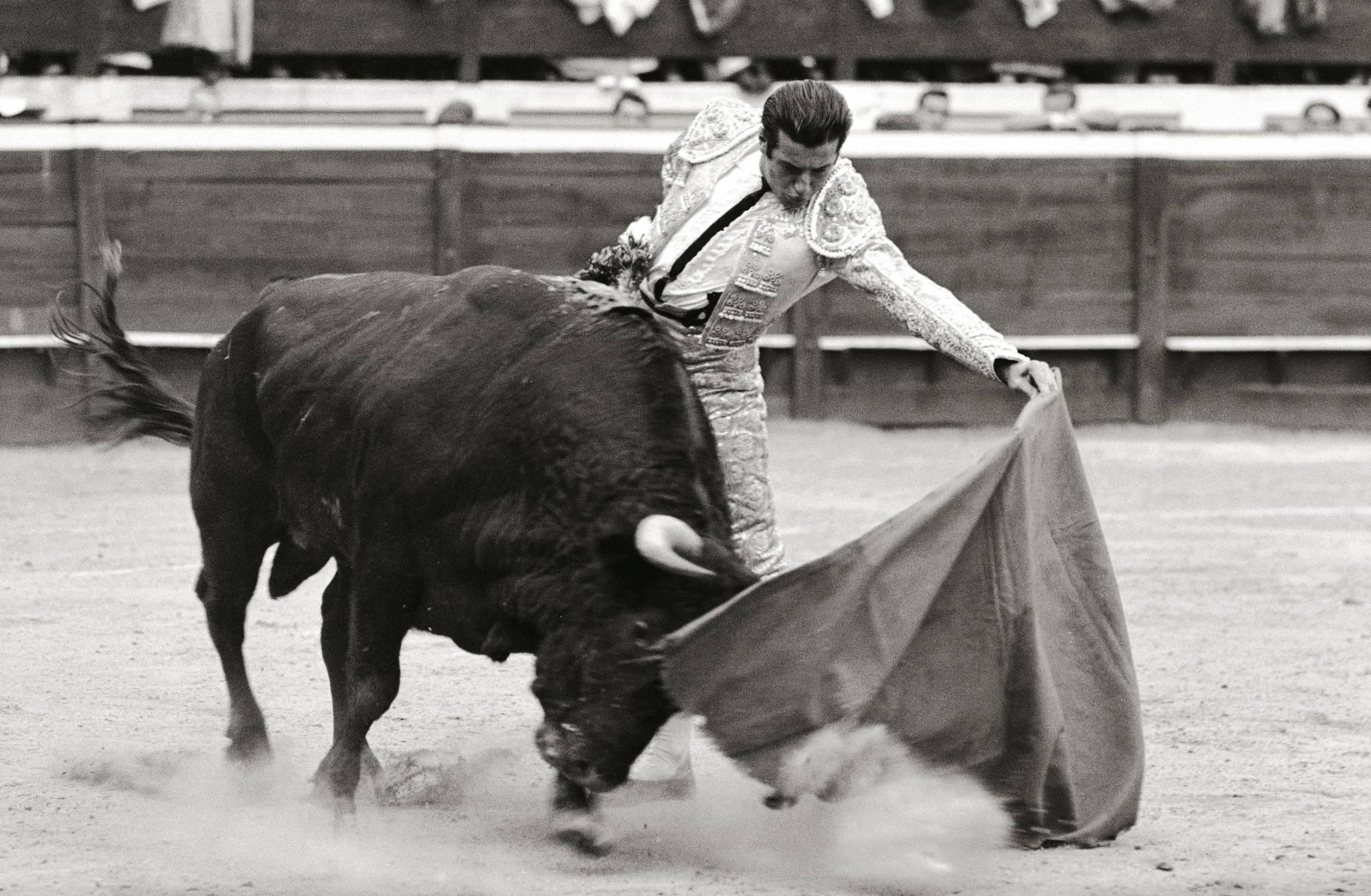 Ordonez pulling bull
