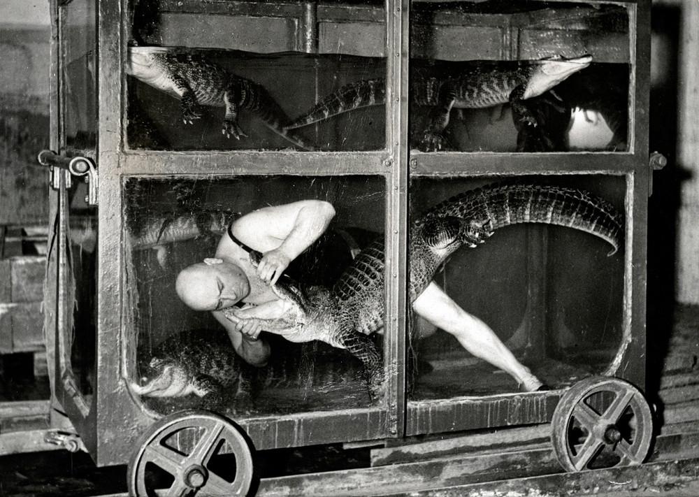 A circus performer in an aquarium car with crocodiles