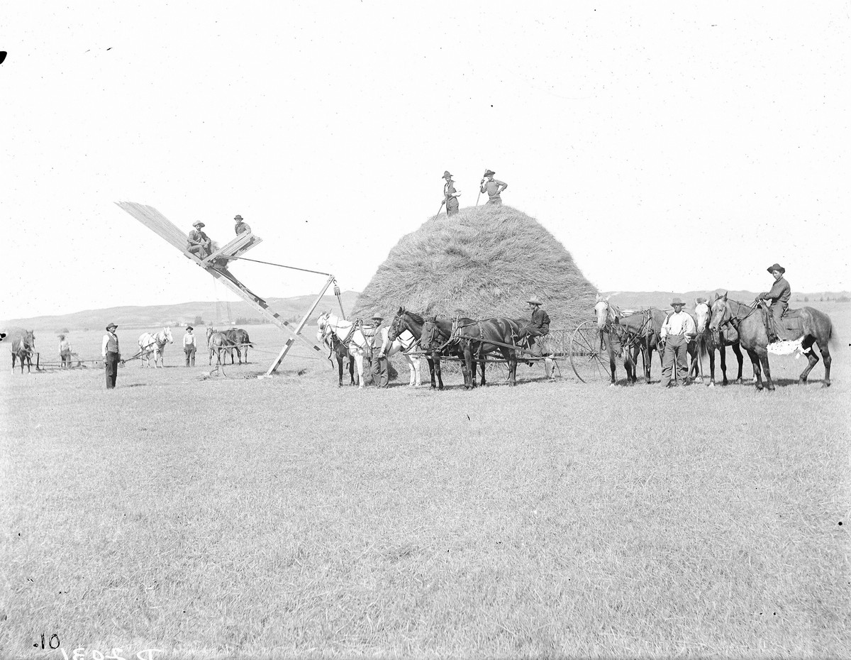 Hay-laying in Buffalo County, Nebraska, 1903