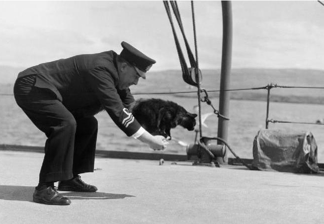 Unsinkable Sam - a cat that survived three WWII shipwrecks