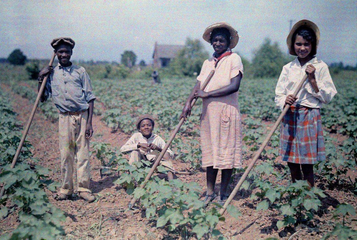 People in the cotton field in Louisiana, 1920s