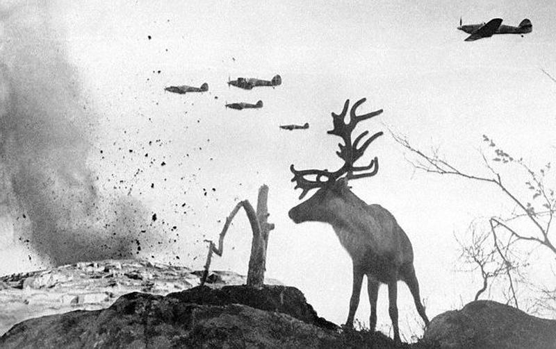 Reindeer operation
