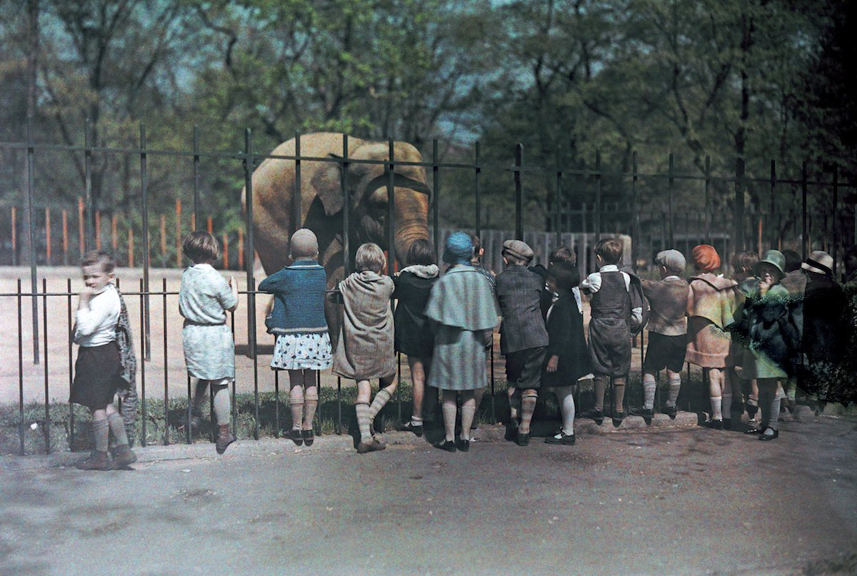 A group of children looks at an elephant at the National Zoo.