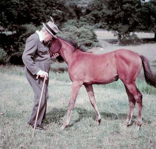 Winston Churchill and his thoroughbred four-month-old mare, whom he called Darling Chartwell, 1950.